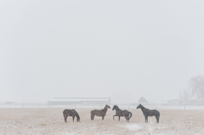 Montana Fine Art Photographer Horses Snow Bozeman02