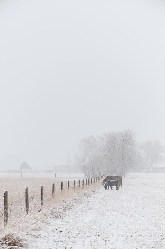 Montana Fine Art Photographer Horses Snow Bozeman04